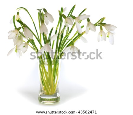 Spring snowdrop flowers nosegay isolated on white background with some shadows. Composite macro photo with considerable depth of sharpness.