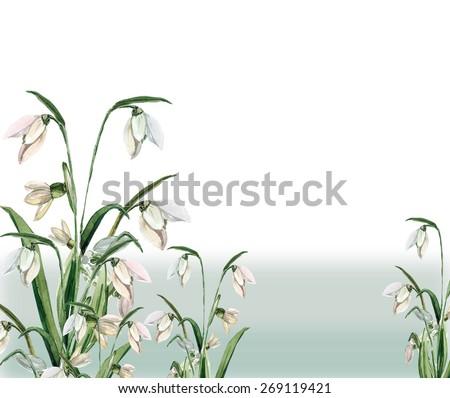 Spring snowdrop flowers pattern - stock photo