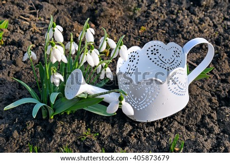 spring snowdrops and watering can on the ground - stock photo