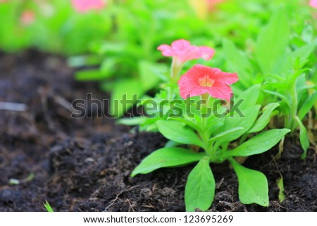 Spring sprouts - stock photo