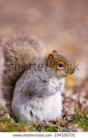 Spring squirrel - stock photo