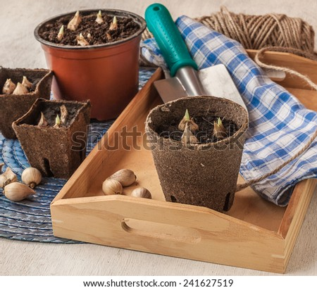 Spring still life with watering and peat pots with plants  - stock photo