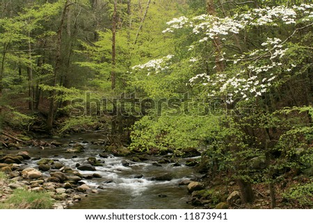 Spring Stream with Dogwood blooms in Great Smoky Mountains National park. - stock photo