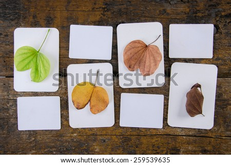 Spring, summer, autumn and winter leaves   - stock photo