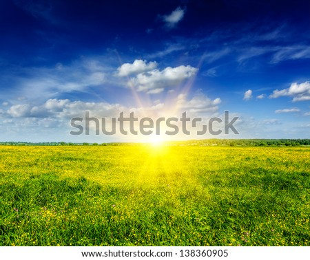 Spring summer background - blooming flowers field meadow with blue sky and bright sun - stock photo