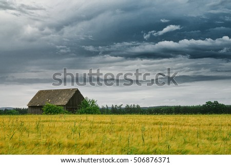 Spring summer background - grass field meadow scenery landscape