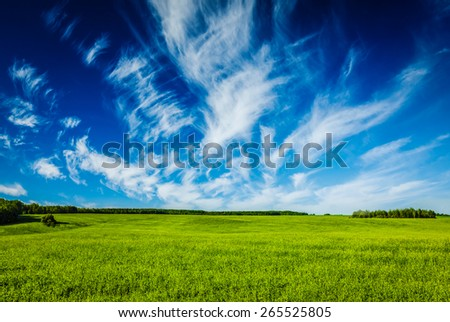Spring summer background - green grass field meadow scenery lanscape with blue sky - stock photo