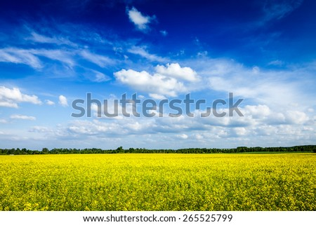 Spring summer background - yellow canola field with blue sky - stock photo