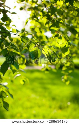 Spring/summer in city park (closeup detail of fresh green leaves, pure environment concept, colorful image) - stock photo