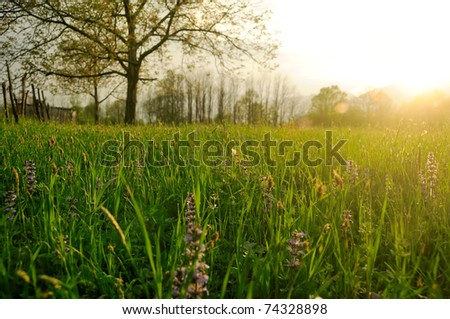 Spring sunlight over meadow - stock photo