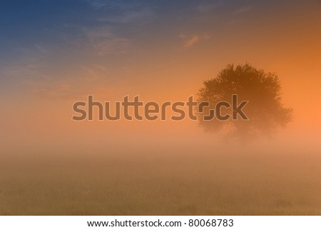spring sunrise above fields with the fog - stock photo