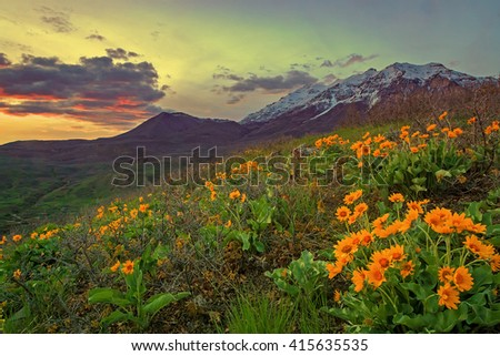 Spring sunset with yellow wildflowers in rural Utah, USA. - stock photo