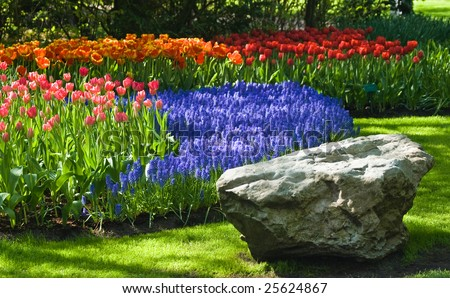 Spring time in park with blooming tulips and common grape hyacinth - stock photo