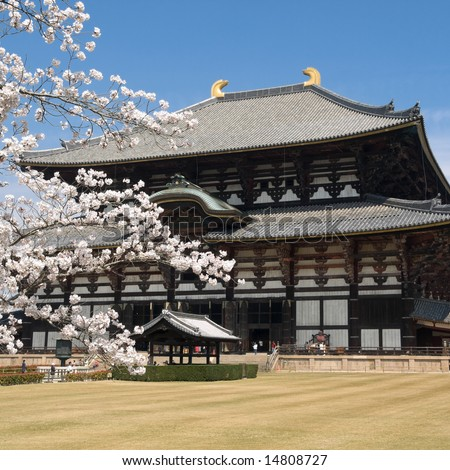 Spring time view Nara Todai-ji temple with cherry blossoms