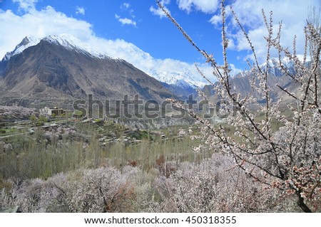 Spring time with Cherry blossoms in Hunza valley with Karakorum mountains , North Pakistan - stock photo