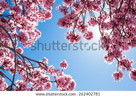 Spring tree - stock photo