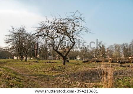 spring tree and blue sky - stock photo