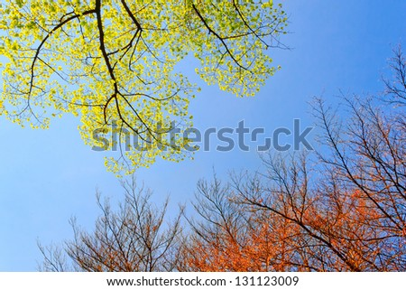 Spring tree branches against the sky. Spring landscape. - stock photo