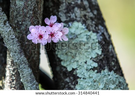 Spring tree flowers - stock photo