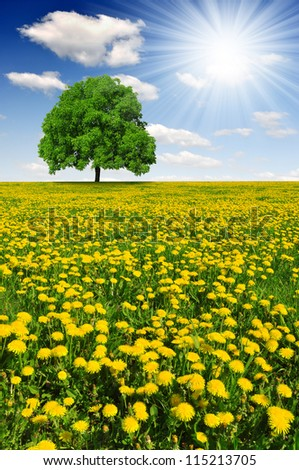 Spring tree on dandelions field - stock photo