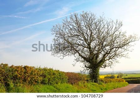 Spring tree on green field - stock photo