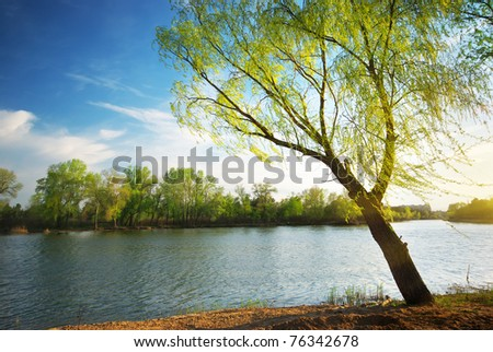 Spring tree on river. Nature composition. - stock photo