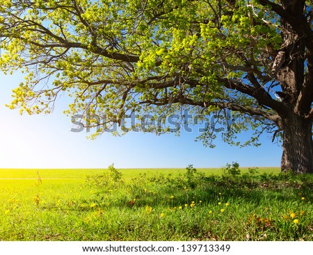 Spring tree with fresh green leaves on a blooming meadow - stock photo