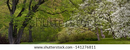 Spring Trees Flowering dogwoods and other trees create a tapestry of spring color at The Morton Arboretum in Lisle, Illinois. - stock photo