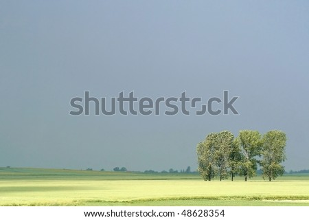 Spring trees in the field of rapeseed before the storm. Photo taken in May. - stock photo