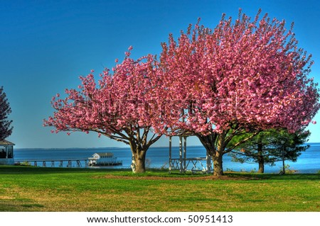 Spring trees on the Chesapeake Bay Maryland - stock photo