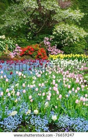 Spring tulip field in butchart gardens, vancouver island, british columbia, canada - stock photo