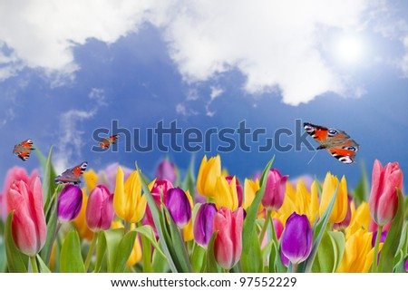 Spring tulips - field of spring flowers - stock photo