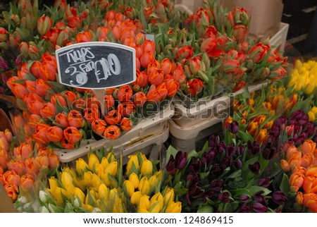 Spring tulips for sale - stock photo