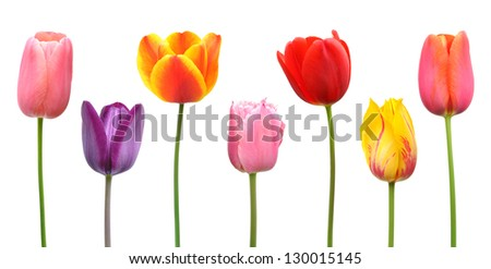 Spring tulips in assorted colors of pink, purple, orange, red, and yellow - stock photo