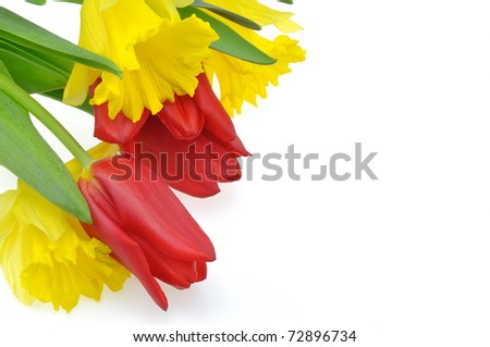 Spring tulips with daffodil
