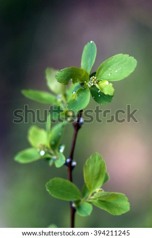 Spring twig - stock photo