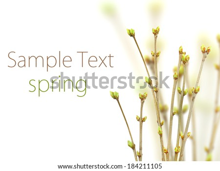 spring twig with buds - stock photo