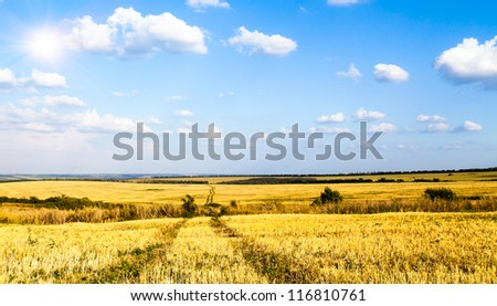 Spring wheat field with a dirt road in the afternoon sun. - stock photo