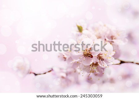 Spring white blossom against soft pink background - stock photo