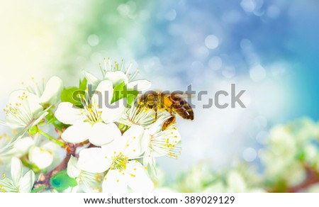 spring white flower and bee