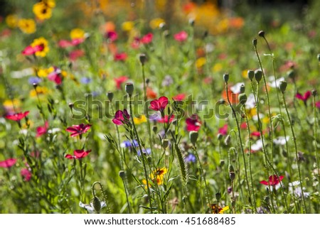 spring wild flowers background