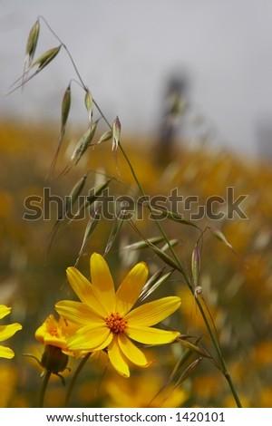 spring wildflowers - stock photo