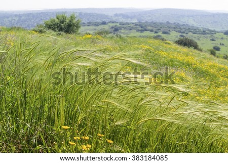 Spring. Wildflowers, feather in the wind. - stock photo
