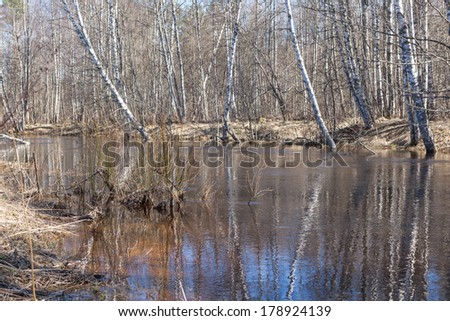 Spring wood. A spring landscape - stock photo