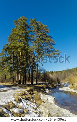 Spring wood on river bank, Ural Mountains, Russia - stock photo