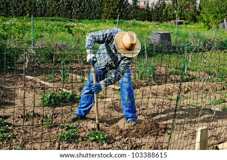 Spring work in the garden. Man working with a hoe between vegetable crops. - stock photo