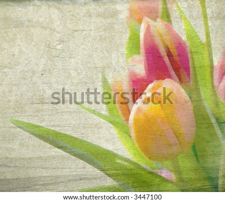 Spring Yellow and Pink Tulips - stock photo