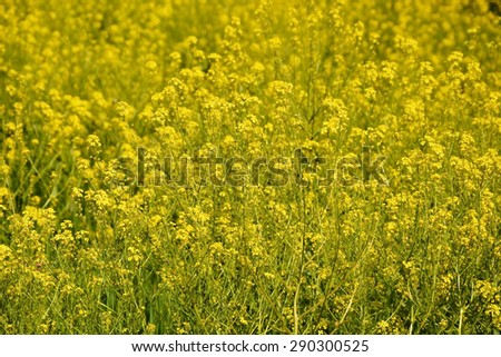 Spring yellow flowers as a background - stock photo