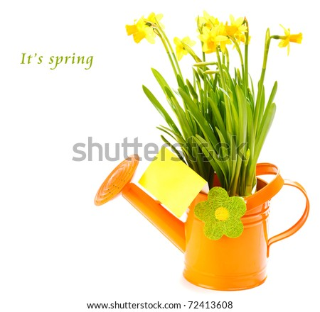 Spring yellow flowers in the orange watering can, with a blank greeting card - stock photo