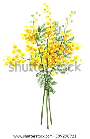 Spring yellow mimosa flower acacia dealbata stock illustration spring yellow mimosa flower acacia dealbata silver wattle hand drawn isolated mightylinksfo